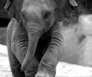 baby, elephant, and little image