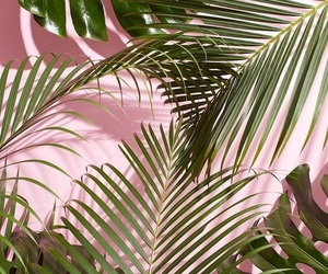 wallpaper, pink, and plants image