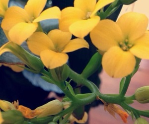 flower, yeah, and yellow image