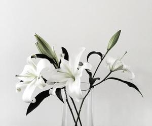 flowers, white, and tumblr image