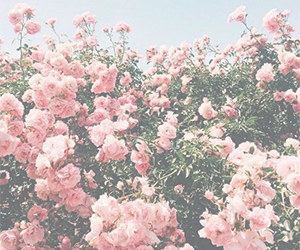 pale, pink, and pastel image