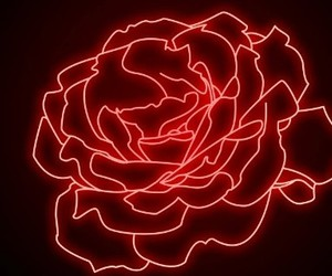 red, rose, and light image