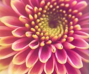 flower, fotograf, and hobby image