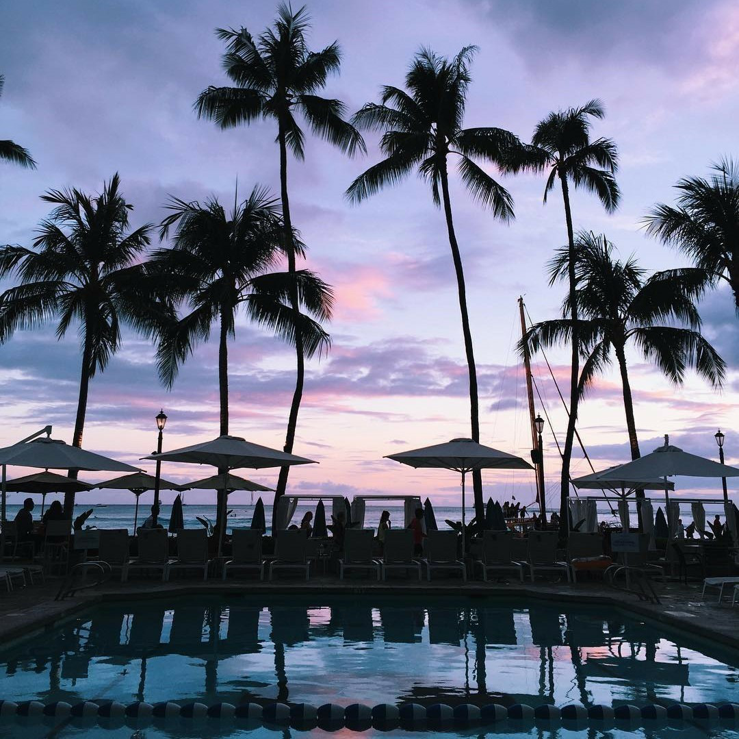 sky, palm trees, and view image