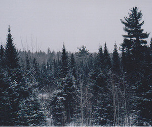 tree, forest, and winter image