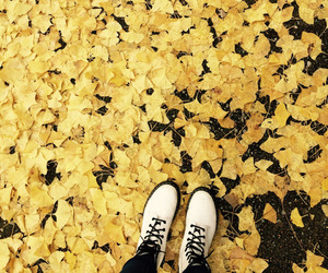 yellow, aesthetic, and autumn image