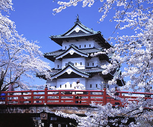 blossom, japan, and japanese image