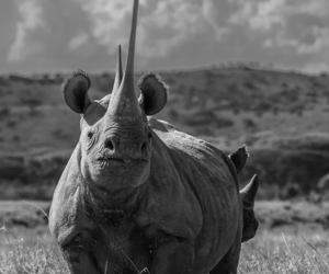 animal, rhino, and rhinoceros image