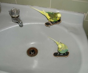bird, skate, and funny image