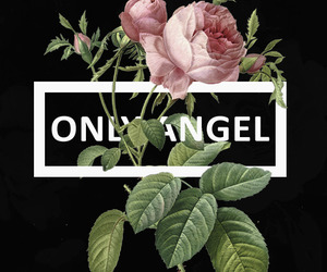 Harry Styles, Lyrics, and only angel image