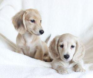 adorable, animals, and dog image