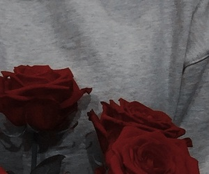 red, roses, and lockscreen image
