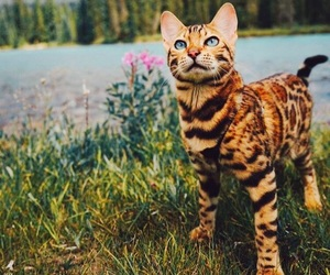 cat, meow, and pretty image