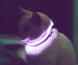 cat, neon, and aesthetic image
