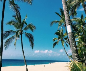 beach, palm trees, and sand image