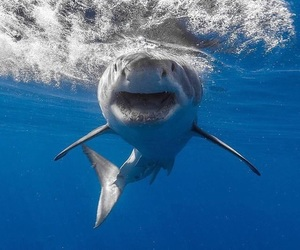 aesthetic, blue, and jaws image