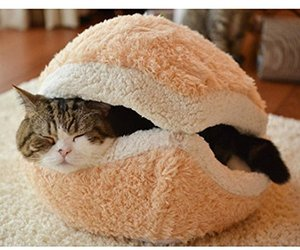cat, sleeping cat, and cat bed image