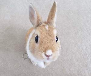 adorable, bunny, and animal image