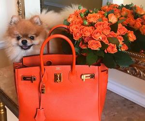flowers, bag, and dog image