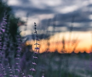 aesthetic, clouds, and flower image