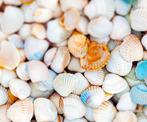 shell, ocean, and wallpaper image