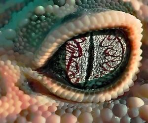 eye, lizard, and reptile image