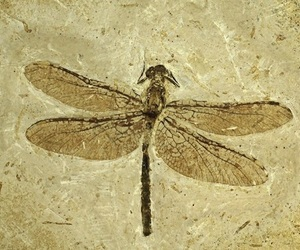 archeology, dragonfly, and fossil image