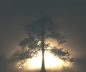 tree, photography, and sun image