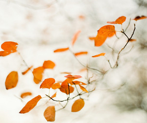 120mm, autumn, and fall image