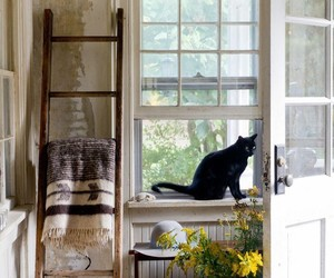 cat, home, and autumn image