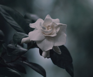 black, nature, and rose image