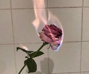 fire, green, and rose image