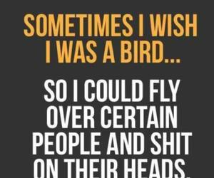 bird, shit, and funny image