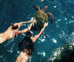 Animales, Tortuga, and mar image