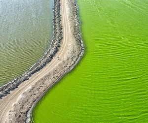 aerial photography, green, and lime green image
