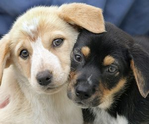 dogs, puppy, and adorable image