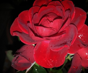 beautiful, red, and beauty image