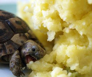 animals, turtles, and baby turtle image