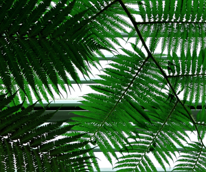 green, lines, and green&white image