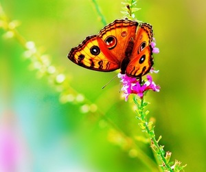 beautiful, butterfly, and wallpapers image