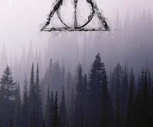 forest, potter, and harrypotter image