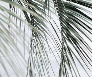 nature, neutral, and minimalist image