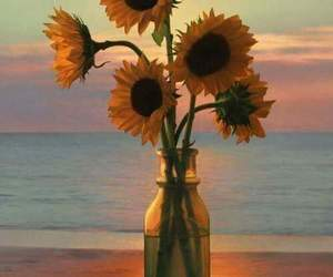 sunset and sunflowers image