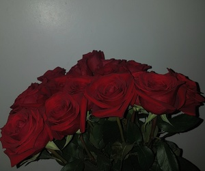 flowers, red, and redroses image