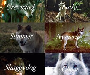 got, game of thrones, and direwolves image
