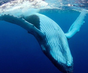 blue, ocean, and whale image