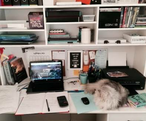 cat, room, and decor image