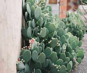 cactus, plants, and photography image