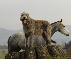 animals, horse, and animal friends image