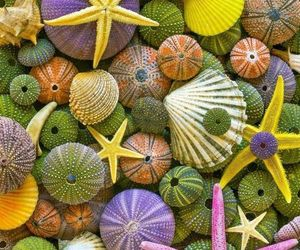 beach, starfish, and colors image